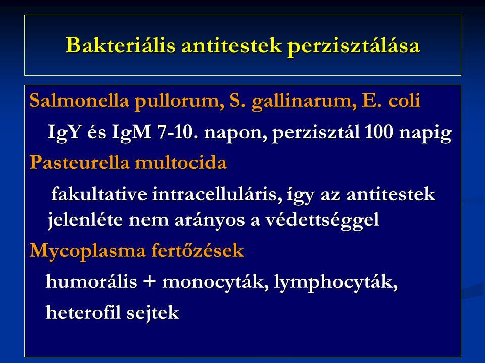 Bakteriális antitestek perzisztálása Salmonella pullorum, S.
