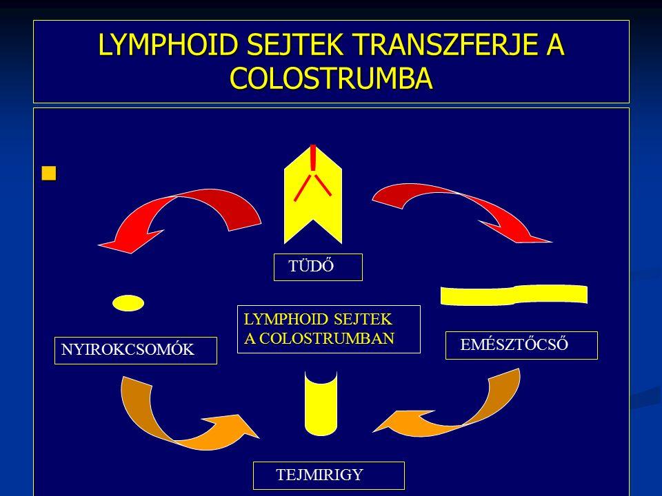 IgM IgA szekréciós IgY, IgM (kacsák, libák) szekréciós IgY, IgM, IgB (tyúk, pulyka) J-lánc Vérben pentamer 7 S IgM petevezetőben