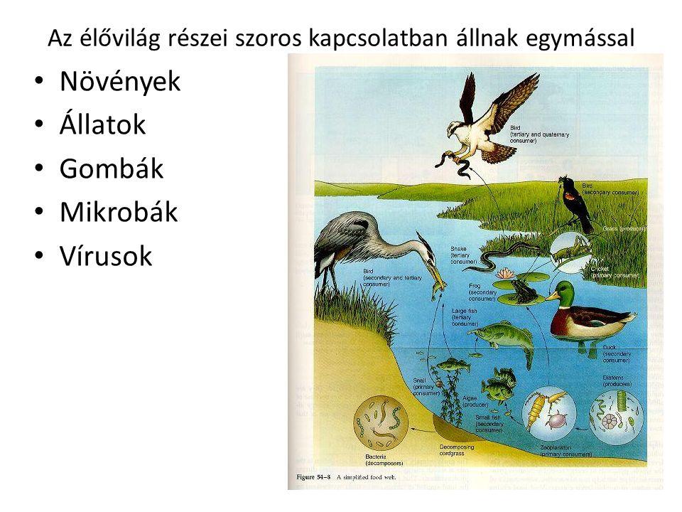 ökológia Az ökológia a tudományoknak azon ága, amely az élettereket, az él ő lények és a környezet kapcsolatait vizsgálja.