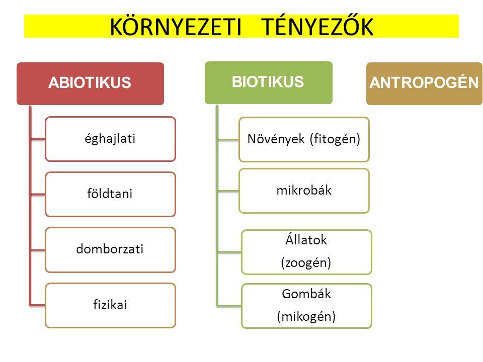 KÖRNYEZETI TÉNYEZŐK ABIOTIKUS éghajlatiföldtanidomborzatifizikai ANTROPOGÉNBIOTIKUS Növények (fitogén)mikrobák Állatok (zoogén) Gombák (mikogén)