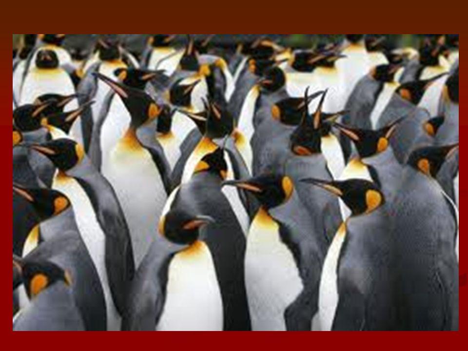 Társulás Egy adott területen a különböző fajokhoz tartozó populációk Egy adott területen a különböző fajokhoz tartozó populációk közössége közössége Például: a gyertyános- tölgyes a tündérrózsa hínártársulás a tündérrózsa hínártársulás