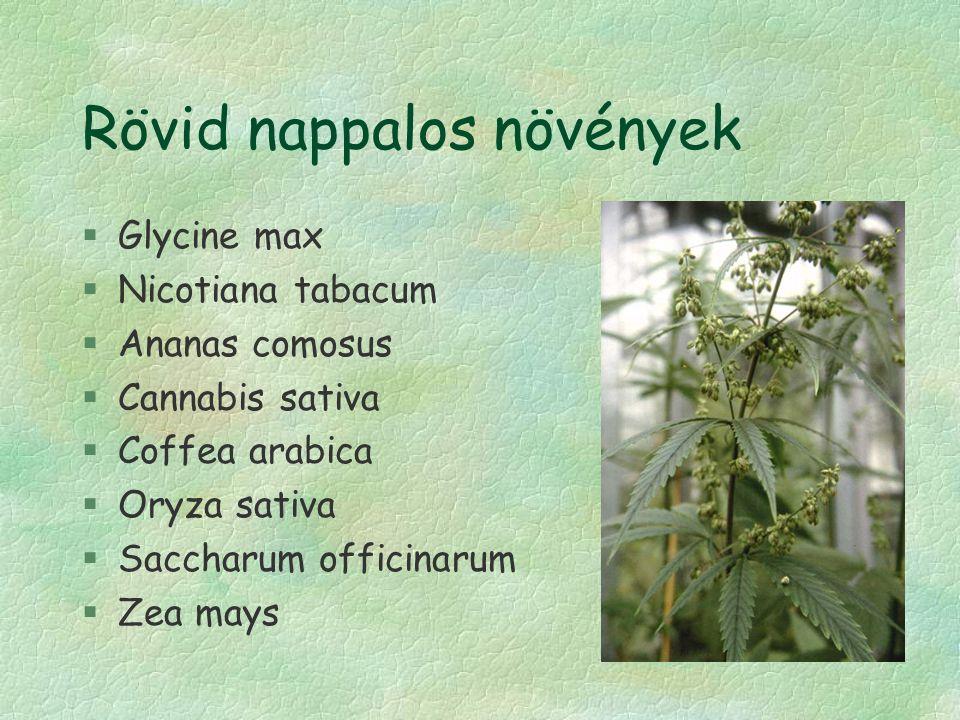 Rövid nappalos növények §Glycine max §Nicotiana tabacum §Ananas comosus §Cannabis sativa §Coffea arabica §Oryza sativa §Saccharum officinarum §Zea may