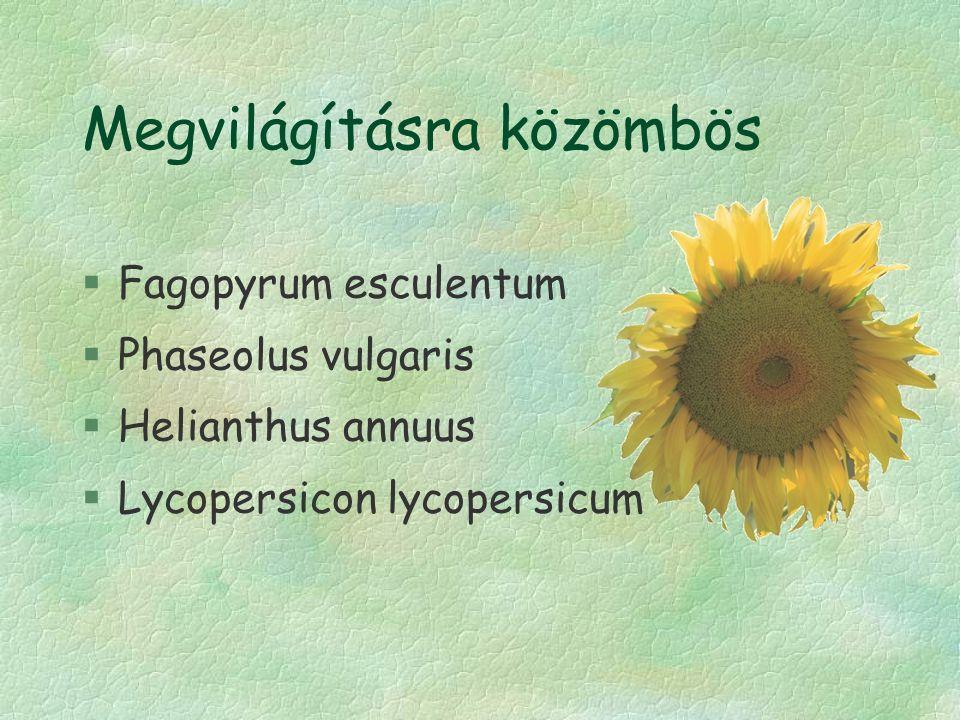 Megvilágításra közömbös §Fagopyrum esculentum §Phaseolus vulgaris §Helianthus annuus §Lycopersicon lycopersicum