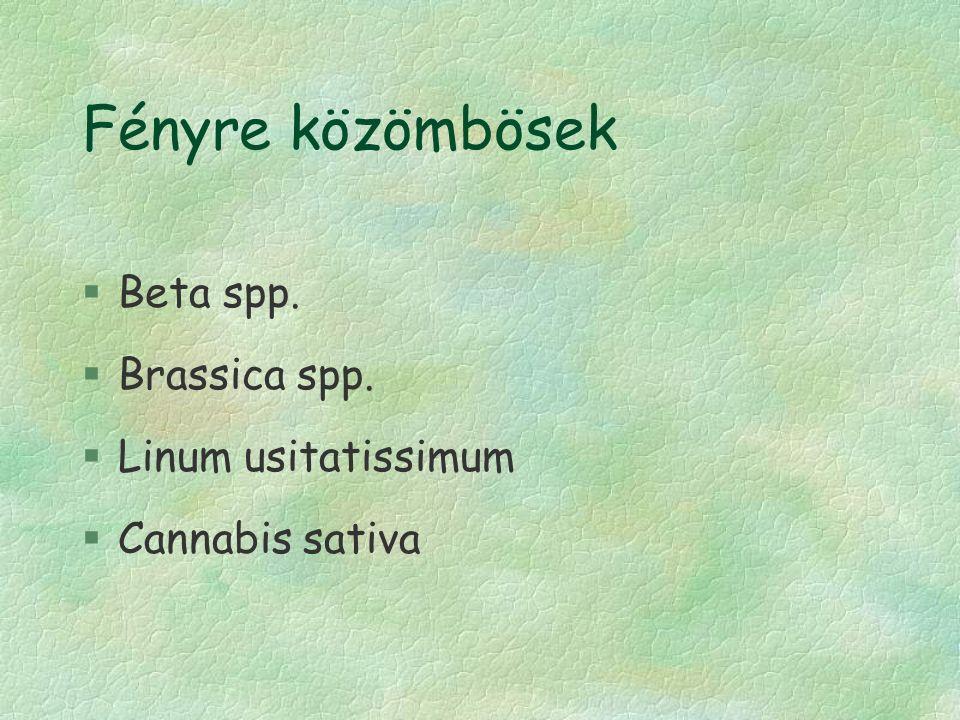 Fényre közömbösek §Beta spp. §Brassica spp. §Linum usitatissimum §Cannabis sativa