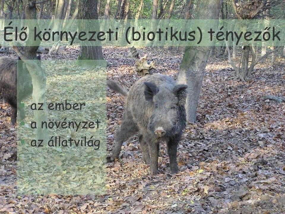 Élő környezeti (biotikus) tényezők §az ember §a növényzet §az állatvilág