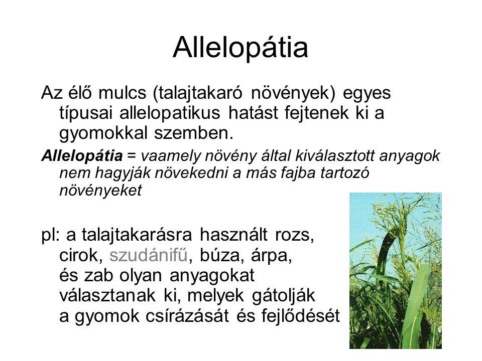Allelopátia Az élő mulcs (talajtakaró növények) egyes típusai allelopatikus hatást fejtenek ki a gyomokkal szemben.