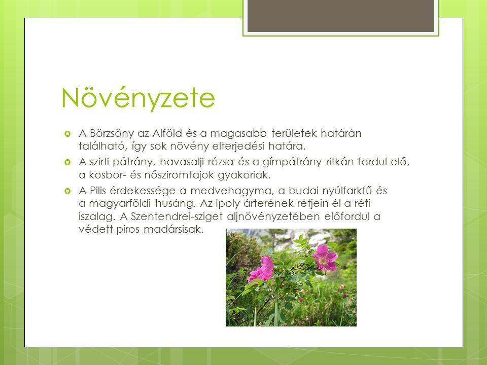 Növényzete  A Börzsöny az Alföld és a magasabb területek határán található, így sok növény elterjedési határa.  A szirti páfrány, havasalji rózsa és