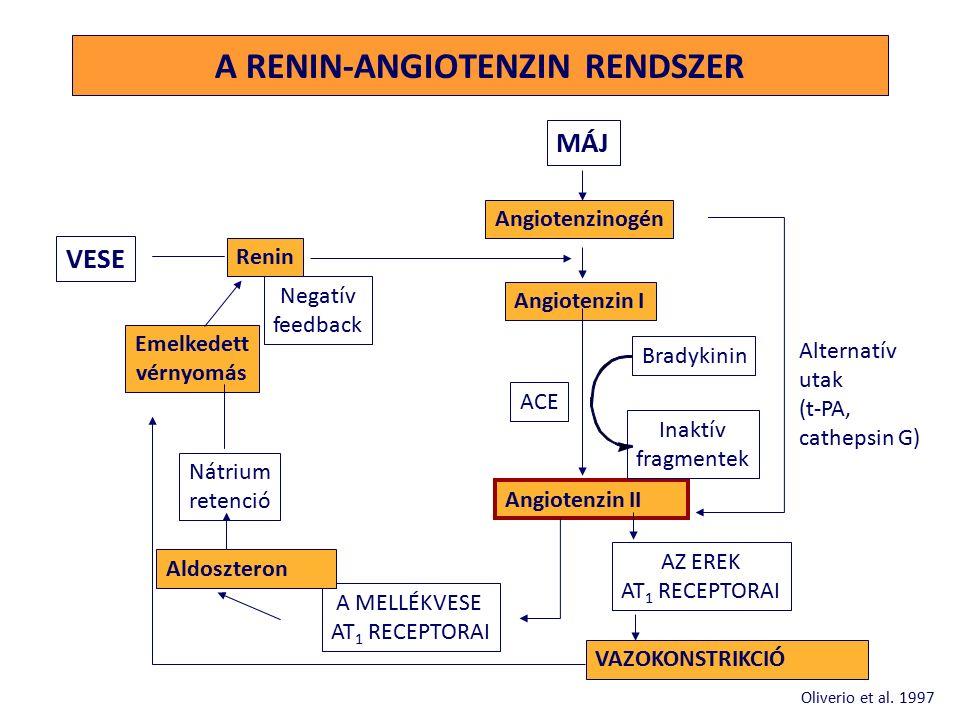 A RENIN-ANGIOTENZIN RENDSZER Alternatív utak (t-PA, cathepsin G) MÁJ Angiotenzinogén Angiotenzin I Angiotenzin II VAZOKONSTRIKCIÓ Bradykinin Inaktív fragmentek ACE AZ EREK AT 1 RECEPTORAI A MELLÉKVESE AT 1 RECEPTORAI VESE Renin Negatív feedback Emelkedett vérnyomás Nátrium retenció Aldoszteron Oliverio et al.