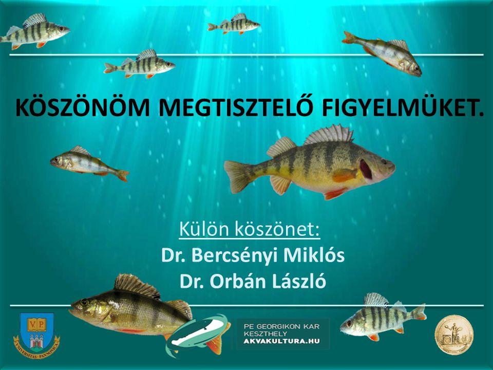KÖSZÖNÖM MEGTISZTELŐ FIGYELMÜKET. Külön köszönet: Dr. Bercsényi Miklós Dr. Orbán László