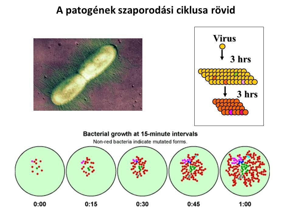 Virus 3 hrs A patogének szaporodási ciklusa rövid