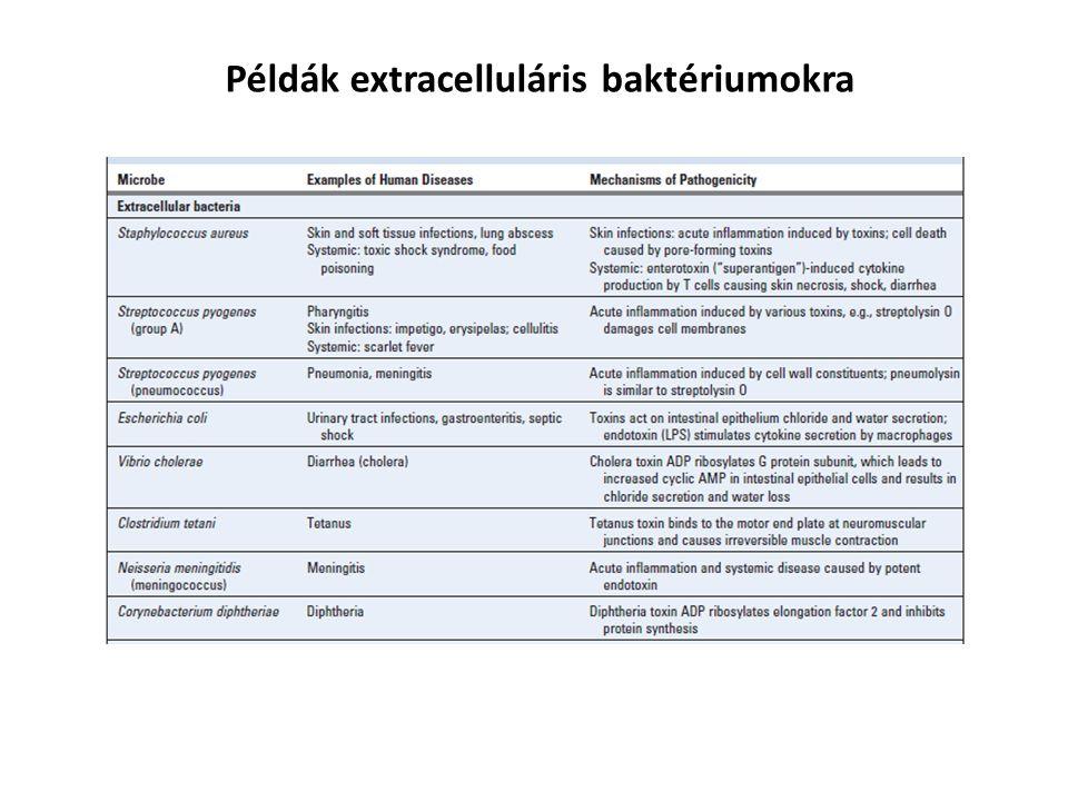 Példák extracelluláris baktériumokra