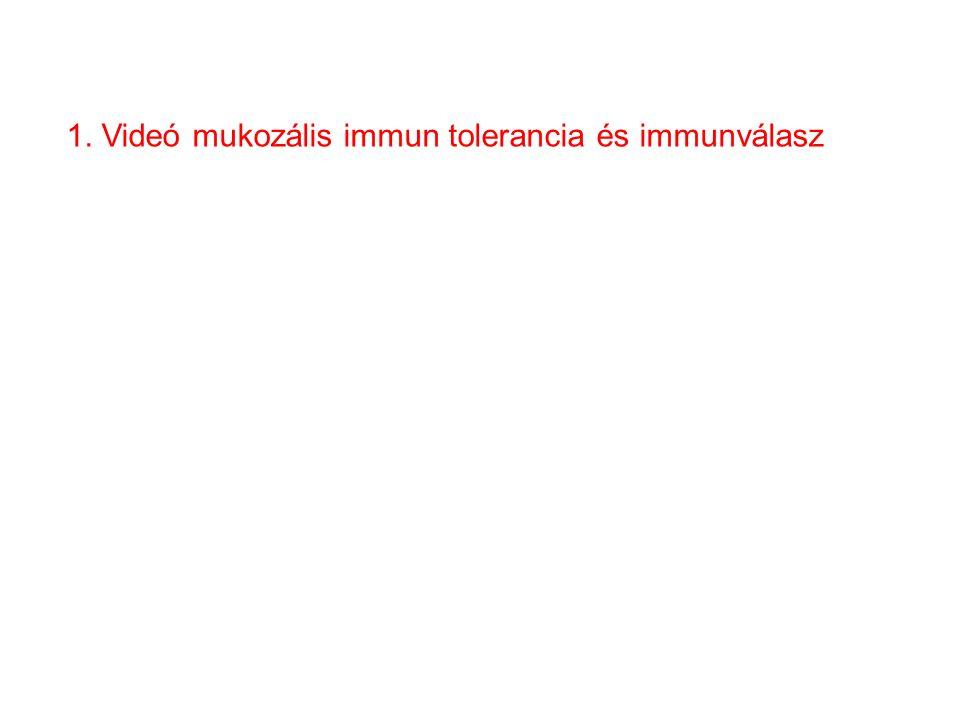 1. Videó mukozális immun tolerancia és immunválasz