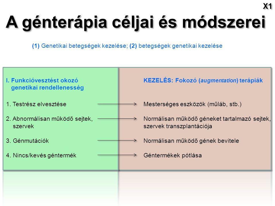 A génterápia céljai és módszerei X1 (1) Genetikai betegségek kezelése; (2) betegségek genetikai kezelése I.
