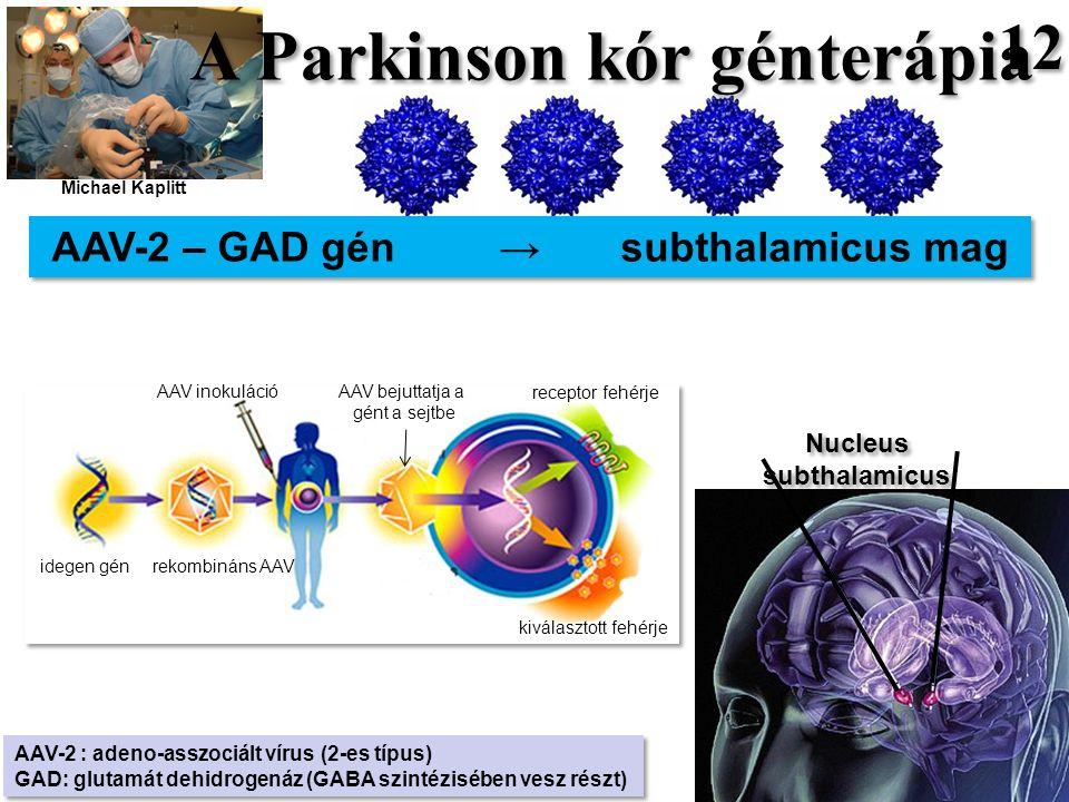 12 AAV-2 – GAD gén → subthalamicus mag AAV-2 : adeno-asszociált vírus (2-es típus) GAD: glutamát dehidrogenáz (GABA szintézisében vesz részt) AAV-2 : adeno-asszociált vírus (2-es típus) GAD: glutamát dehidrogenáz (GABA szintézisében vesz részt) Nucleus subthalamicus idegen gén rekombináns AAV AAV inokuláció AAV bejuttatja a gént a sejtbe receptor fehérje kiválasztott fehérje A Parkinson kór génterápia Michael Kaplitt
