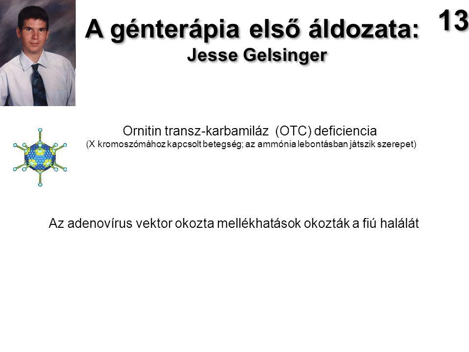 A génterápia első áldozata: Jesse Gelsinger A génterápia első áldozata: Jesse Gelsinger Ornitin transz-karbamiláz (OTC) deficiencia (X kromoszómához kapcsolt betegség; az ammónia lebontásban játszik szerepet) Az adenovírus vektor okozta mellékhatások okozták a fiú halálát 13