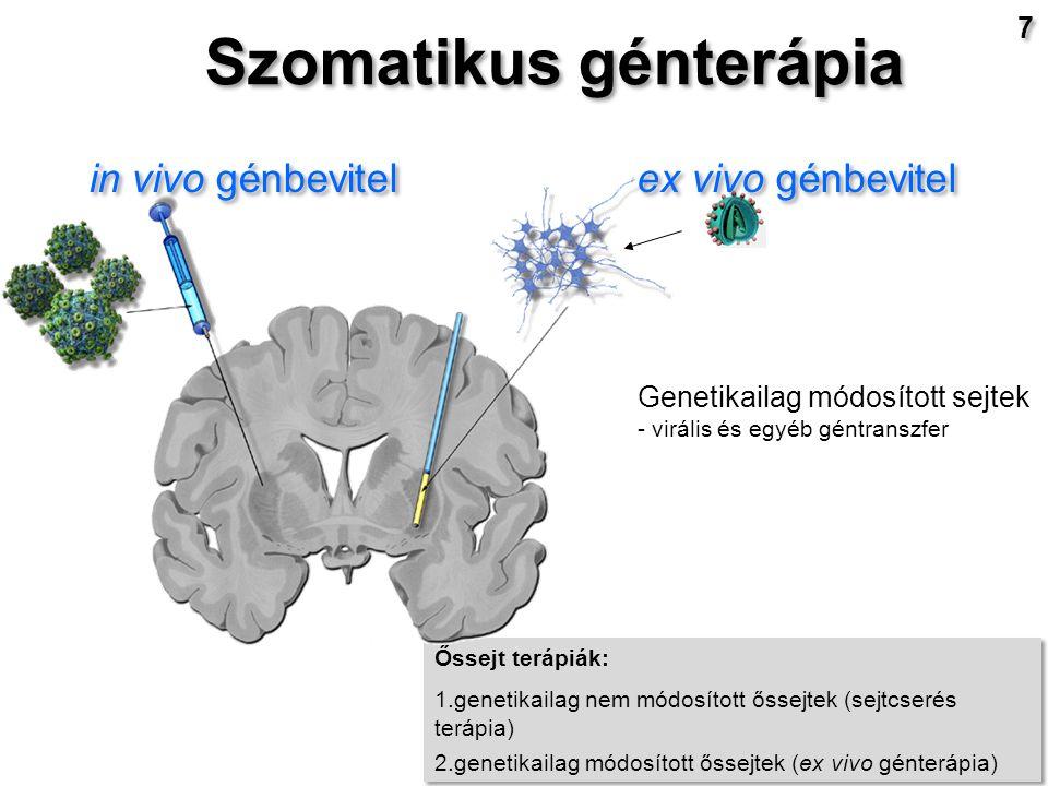 Őssejt terápiák: 1.genetikailag nem módosított őssejtek (sejtcserés terápia) 2.genetikailag módosított őssejtek (ex vivo génterápia) Őssejt terápiák: 1.genetikailag nem módosított őssejtek (sejtcserés terápia) 2.genetikailag módosított őssejtek (ex vivo génterápia) in vivo génbevitel Genetikailag módosított sejtek - virális és egyéb géntranszfer ex vivo génbevitel Szomatikus génterápia 7 7