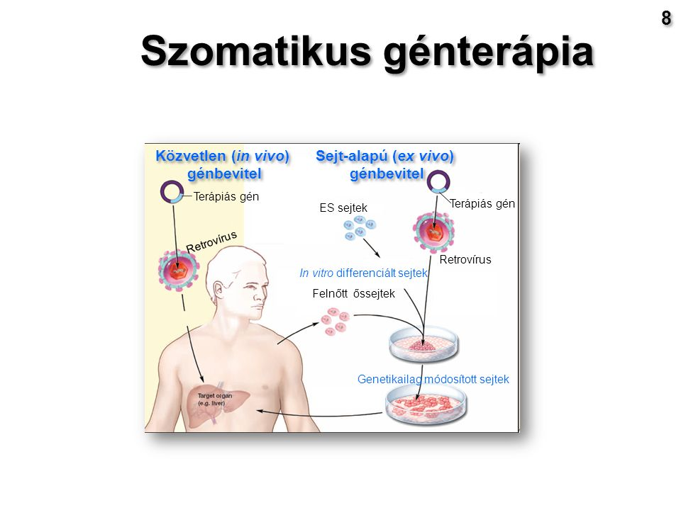 Közvetlen (in vivo) génbevitel Közvetlen (in vivo) génbevitel Sejt-alapú (ex vivo) génbevitel Sejt-alapú (ex vivo) génbevitel Terápiás gén ES sejtek Felnőtt őssejtek In vitro differenciált sejtek Retrovírus Genetikailag módosított sejtek Szomatikus génterápia 8 8