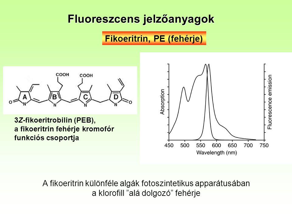 Fikoeritrin, PE (fehérje) 3Z-fikoeritrobilin (PEB), a fikoeritrin fehérje kromofór funkciós csoportja Fluoreszcens jelzőanyagok A fikoeritrin különféle algák fotoszintetikus apparátusában a klorofill alá dolgozó fehérje