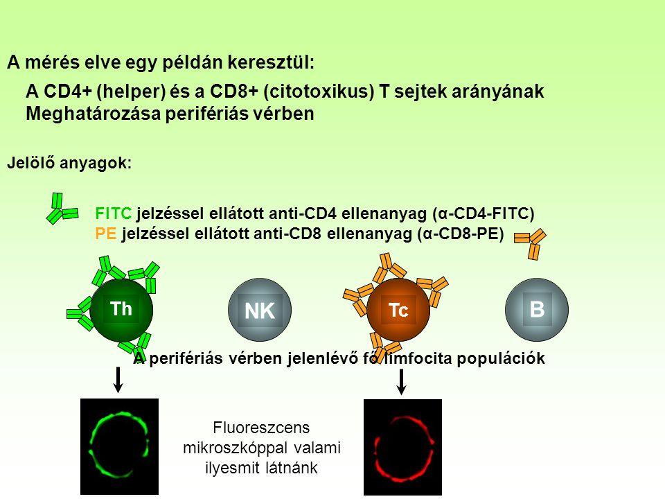 B NK Th Tc A mérés elve egy példán keresztül: A CD4+ (helper) és a CD8+ (citotoxikus) T sejtek arányának Meghatározása perifériás vérben Jelölő anyagok: FITC jelzéssel ellátott anti-CD4 ellenanyag (α-CD4-FITC) PE jelzéssel ellátott anti-CD8 ellenanyag (α-CD8-PE) A perifériás vérben jelenlévő fő limfocita populációk Fluoreszcens mikroszkóppal valami ilyesmit látnánk