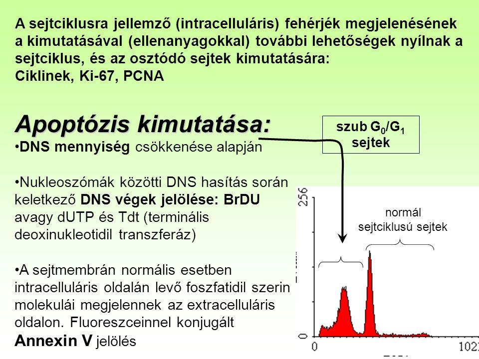 A sejtciklusra jellemző (intracelluláris) fehérjék megjelenésének a kimutatásával (ellenanyagokkal) további lehetőségek nyílnak a sejtciklus, és az osztódó sejtek kimutatására: Ciklinek, Ki-67, PCNA Apoptózis kimutatása: DNS mennyiség csökkenése alapján Nukleoszómák közötti DNS hasítás során keletkező DNS végek jelölése: BrDU avagy dUTP és Tdt (terminális deoxinukleotidil transzferáz) A sejtmembrán normális esetben intracelluláris oldalán levő foszfatidil szerin molekulái megjelennek az extracelluláris oldalon.