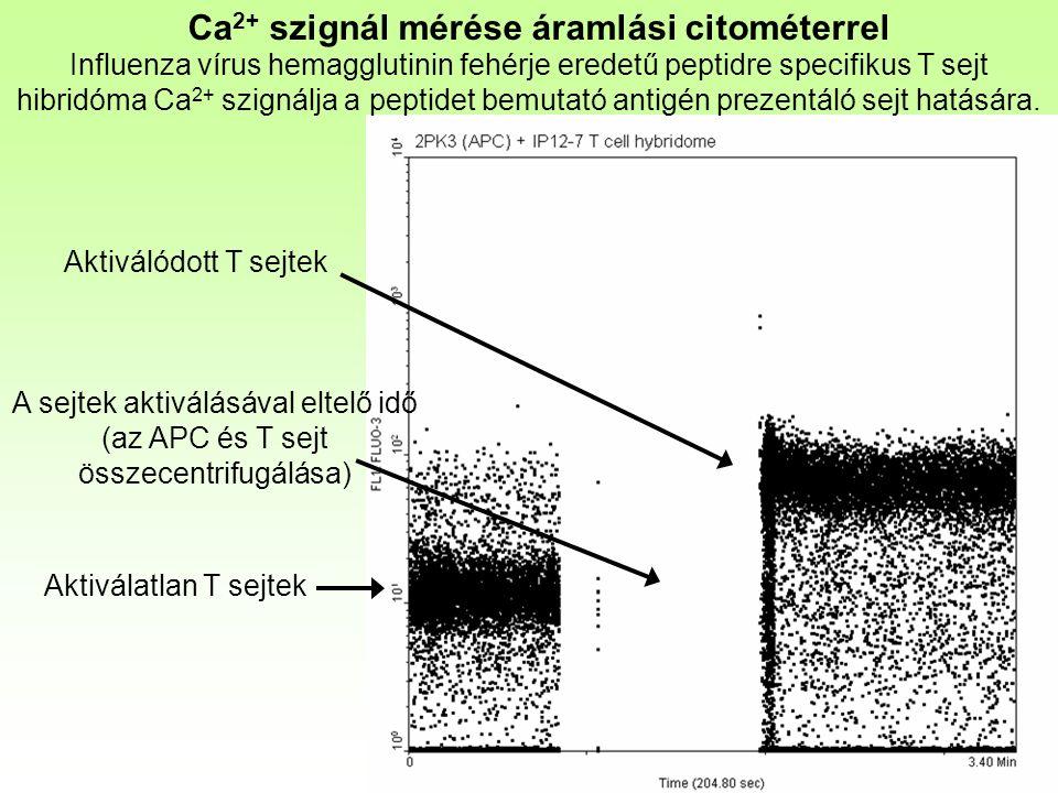 Ca 2+ szignál mérése áramlási citométerrel Influenza vírus hemagglutinin fehérje eredetű peptidre specifikus T sejt hibridóma Ca 2+ szignálja a peptidet bemutató antigén prezentáló sejt hatására.