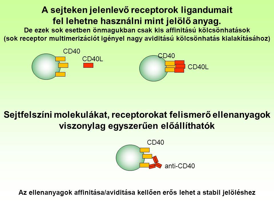 A sejteken jelenlevő receptorok ligandumait fel lehetne használni mint jelölő anyag.
