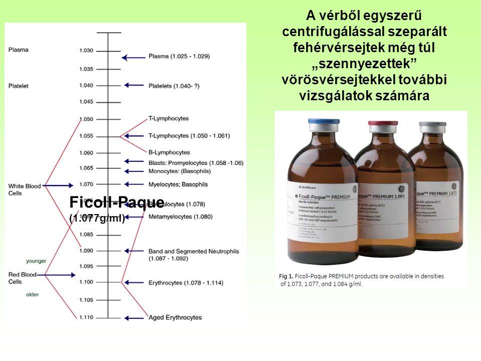 """A vérből egyszerű centrifugálással szeparált fehérvérsejtek még túl """"szennyezettek vörösvérsejtekkel további vizsgálatok számára Ficoll-Paque (1.077g/ml)"""