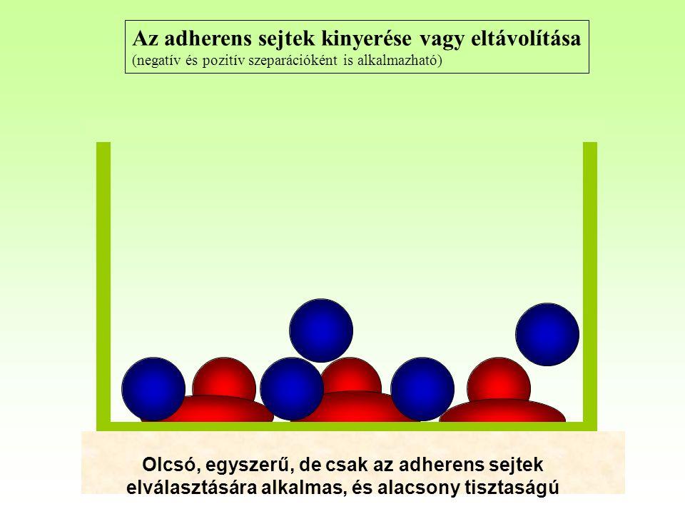 Az adherens sejtek kinyerése vagy eltávolítása (negatív és pozitív szeparációként is alkalmazható) Olcsó, egyszerű, de csak az adherens sejtek elválasztására alkalmas, és alacsony tisztaságú
