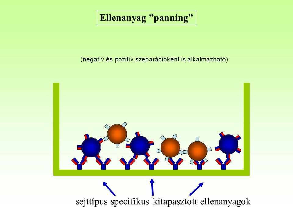 Ellenanyag panning sejttípus specifikus kitapasztott ellenanyagok (negatív és pozitív szeparációként is alkalmazható)
