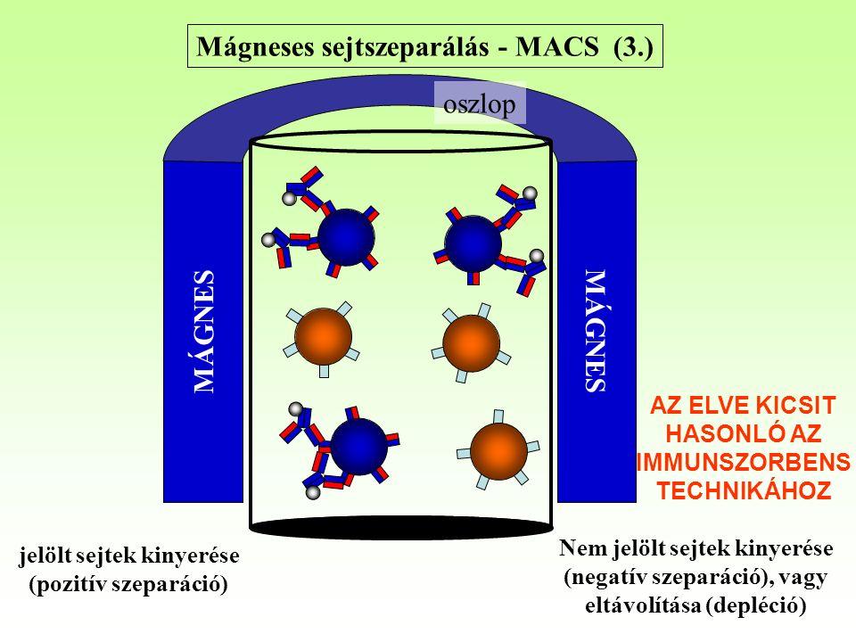 Mágneses sejtszeparálás - MACS (3.) MÁGNES oszlop Nem jelölt sejtek kinyerése (negatív szeparáció), vagy eltávolítása (depléció) jelölt sejtek kinyerése (pozitív szeparáció) AZ ELVE KICSIT HASONLÓ AZ IMMUNSZORBENS TECHNIKÁHOZ