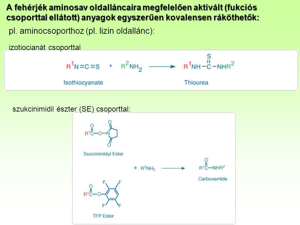 A fehérjék aminosav oldalláncaira megfelelően aktivált (fukciós csoporttal ellátott) anyagok egyszerűen kovalensen ráköthetők: pl.