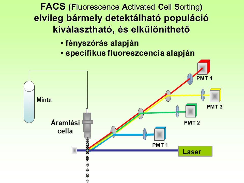 FACS (Fluorescence Activated Cell Sorting) elvileg bármely detektálható populáció kiválasztható, és elkülöníthető PMT 1 PMT 2 PMT 4 Laser Áramlási cella PMT 3 Minta fényszórás alapján specifikus fluoreszcencia alapján
