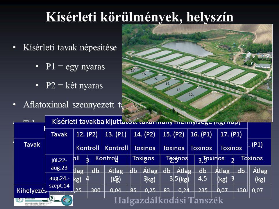 Halgazdálkodási Tanszék Kísérleti körülmények, helyszín Kísérleti tavak népesítése P1 = egy nyaras P2 = két nyaras Aflatoxinnal szennyezett takarmány előkészítése Takarmányozás rendje Lehalászás Kísérleti tavak népesítése, halak száma (db), átlagos tömeg (kg) Tavak 12.