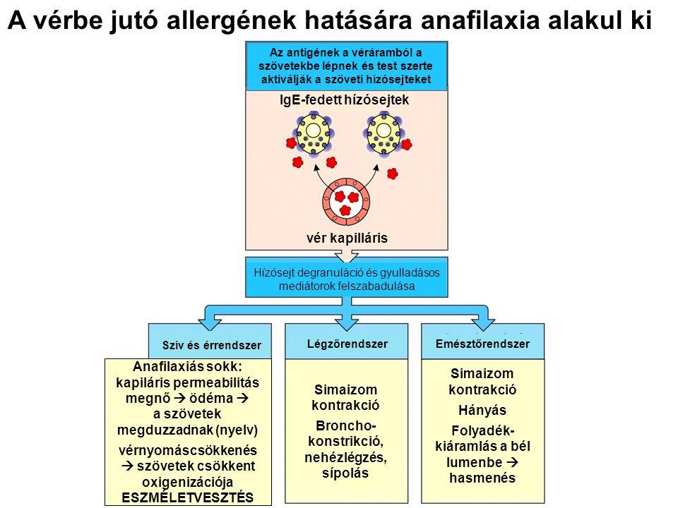 A vérbe jutó allergének hatására anafilaxia alakul ki Hízósejt degranuláció és gyulladásos mediátorok felszabadulása Szív és érrendszer Légzőrendszer Emésztőrendszer Simaizom kontrakció Broncho- konstrikció, nehézlégzés, sípolás Simaizom kontrakció Hányás Folyadék- kiáramlás a bél lumenbe  hasmenés vér kapilláris IgE-fedett hízósejtek Az antigének a véráramból a szövetekbe lépnek és test szerte aktiválják a szöveti hízósejteket Anafilaxiás sokk: kapiláris permeabilitás megnő  ödéma  a szövetek megduzzadnak (nyelv) vérnyomáscsökkenés  szövetek csökkent oxigenizációja ESZMÉLETVESZTÉS
