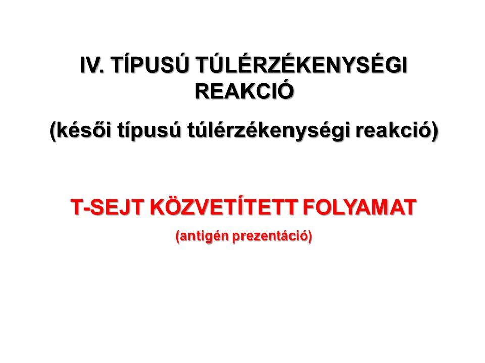 IV. TÍPUSÚ TÚLÉRZÉKENYSÉGI REAKCIÓ (késői típusú túlérzékenységi reakció) T-SEJT KÖZVETÍTETT FOLYAMAT (antigén prezentáció)