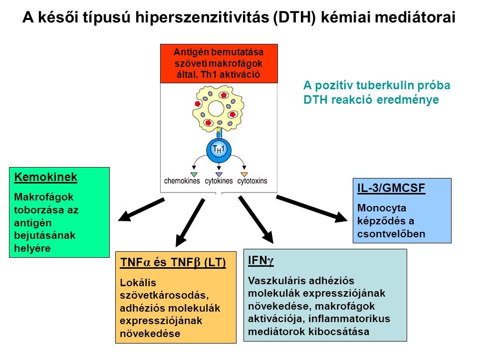 A késői típusú hiperszenzitivitás (DTH) kémiai mediátorai A pozitív tuberkulin próba DTH reakció eredménye Kemokinek Makrofágok toborzása az antigén bejutásának helyére IFN γ Vaszkuláris adhéziós molekulák expressziójának növekedése, makrofágok aktivációja, inflammatorikus mediátorok kibocsátása TNF α és TNF β (LT) Lokális szövetkárosodás, adhéziós molekulák expressziójának növekedése IL-3/GMCSF Monocyta képződés a csontvelőben Antigén bemutatása szöveti makrofágok által, Th1 aktiváció