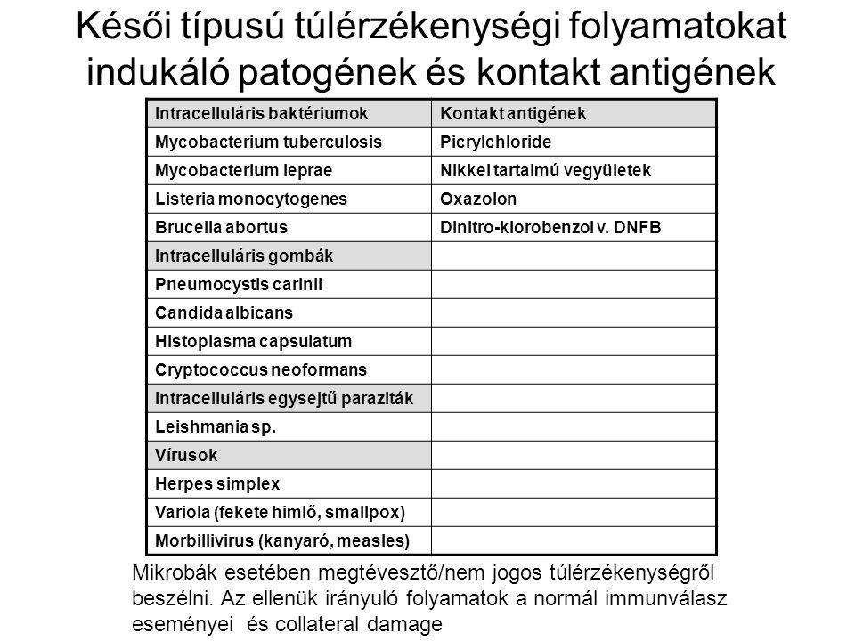 Késői típusú túlérzékenységi folyamatokat indukáló patogének és kontakt antigének Intracelluláris baktériumokKontakt antigének Mycobacterium tuberculosisPicrylchloride Mycobacterium lepraeNikkel tartalmú vegyületek Listeria monocytogenesOxazolon Brucella abortusDinitro-klorobenzol v.