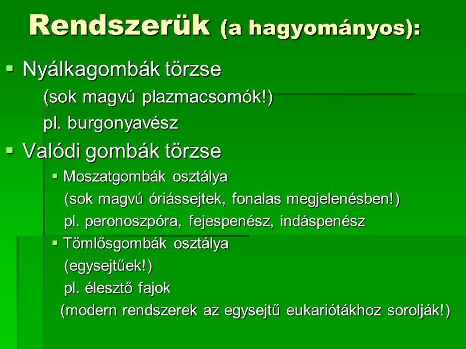 Rendszerük (a hagyományos):  Nyálkagombák törzse (sok magvú plazmacsomók!) (sok magvú plazmacsomók!) pl. burgonyavész pl. burgonyavész  Valódi gombá