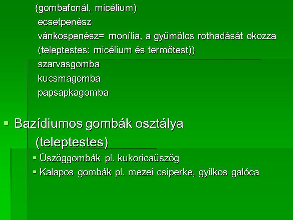 (gombafonál, micélium) (gombafonál, micélium) ecsetpenész ecsetpenész vánkospenész= monília, a gyümölcs rothadását okozza vánkospenész= monília, a gyü