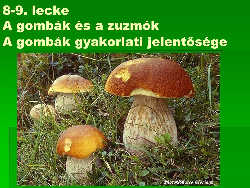 8-9. lecke A gombák és a zuzmók A gombák gyakorlati jelentősége