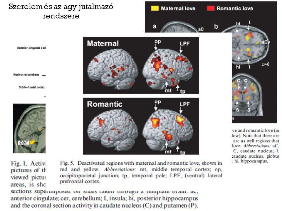 Szerelem és az agy jutalmazó rendszere