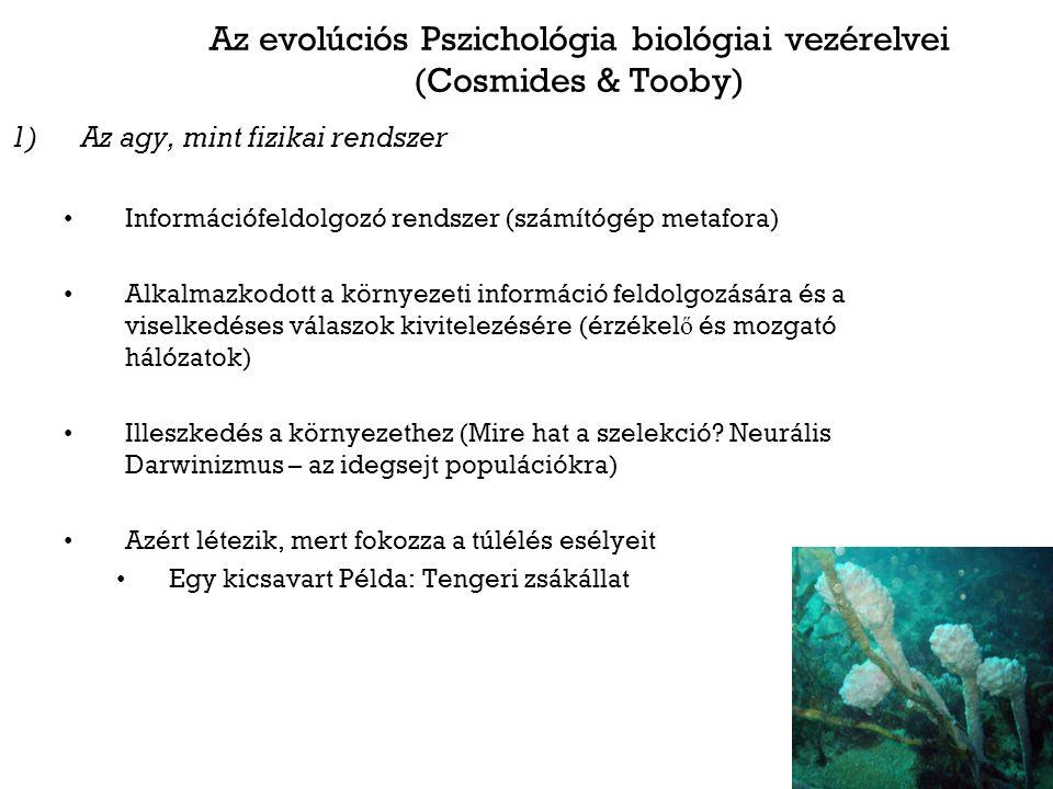 Az evolúciós Pszichológia biológiai vezérelvei (Cosmides & Tooby) 1)Az agy, mint fizikai rendszer Információfeldolgozó rendszer (számítógép metafora) Alkalmazkodott a környezeti információ feldolgozására és a viselkedéses válaszok kivitelezésére (érzékel ő és mozgató hálózatok) Illeszkedés a környezethez (Mire hat a szelekció.