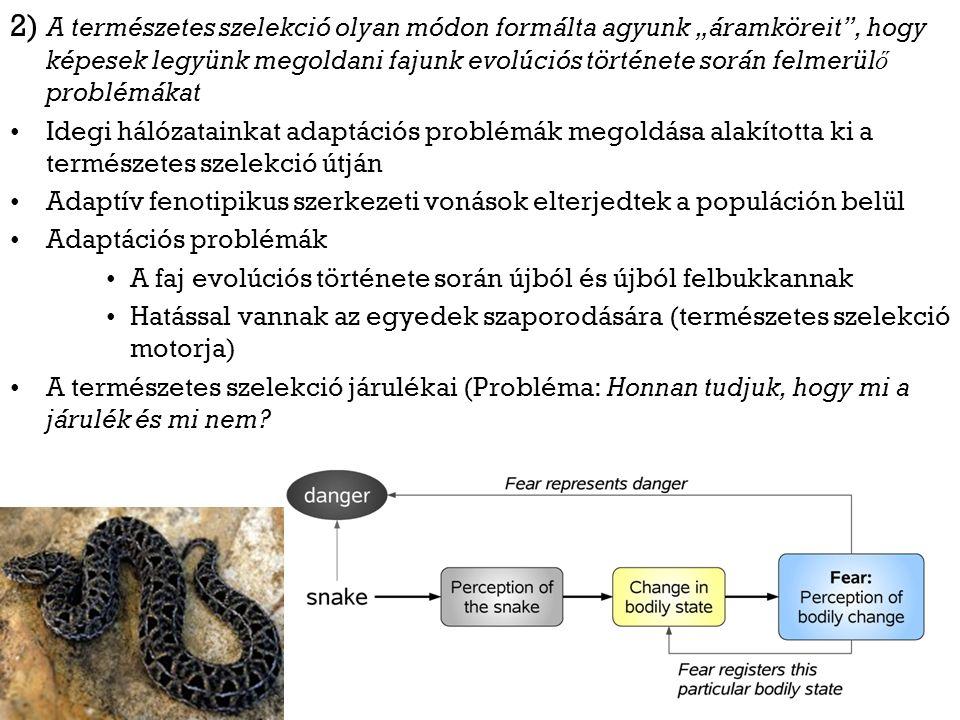 """2) A természetes szelekció olyan módon formálta agyunk """"áramköreit , hogy képesek legyünk megoldani fajunk evolúciós története során felmerül ő problémákat Idegi hálózatainkat adaptációs problémák megoldása alakította ki a természetes szelekció útján Adaptív fenotipikus szerkezeti vonások elterjedtek a populáción belül Adaptációs problémák A faj evolúciós története során újból és újból felbukkannak Hatással vannak az egyedek szaporodására (természetes szelekció motorja) A természetes szelekció járulékai (Probléma: Honnan tudjuk, hogy mi a járulék és mi nem"""