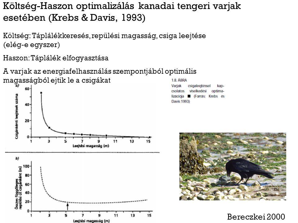 Költség-Haszon optimalizálás kanadai tengeri varjak esetében (Krebs & Davis, 1993) Költség: Táplálékkeresés, repülési magasság, csiga leejtése (elég-e egyszer) Haszon: Táplálék elfogyasztása A varjak az energiafelhasználás szempontjából optimális magasságból ejtik le a csigákat Bereczkei 2000
