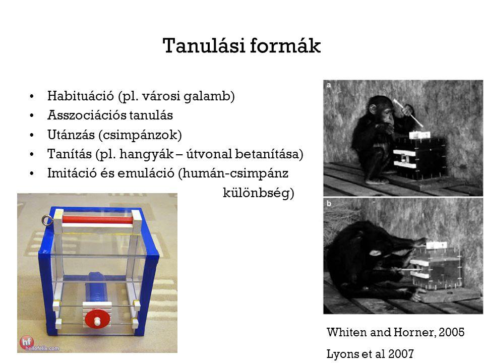 Tanulási formák Habituáció (pl.