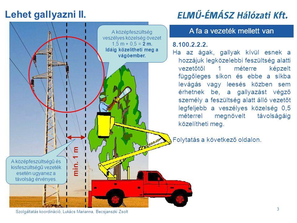 Szolgáltatás koordináció, Lukács Marianna, Becsjanszki Zsolt 3 Lehet gallyazni II.
