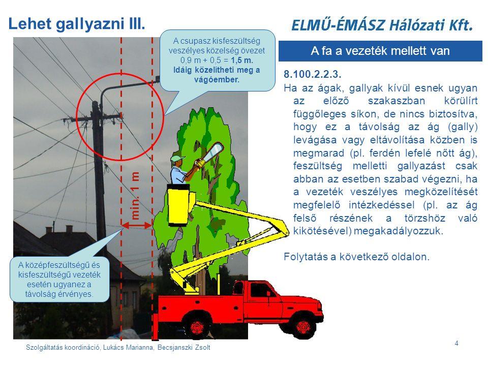Szolgáltatás koordináció, Lukács Marianna, Becsjanszki Zsolt 4 Lehet gallyazni III.