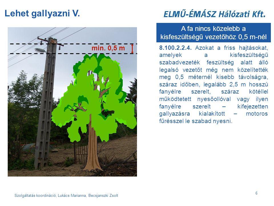 Szolgáltatás koordináció, Lukács Marianna, Becsjanszki Zsolt 6 Lehet gallyazni V.