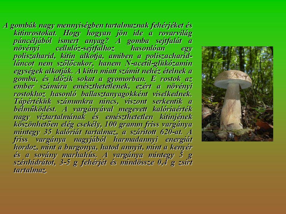 A gombák nagy mennyiségben tartalmaznak fehérjéket és kitinrostokat.