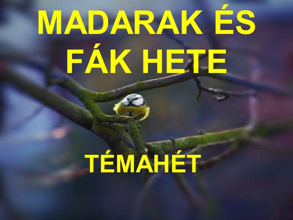 MADARAK ÉS FÁK HETE TÉMAHÉT
